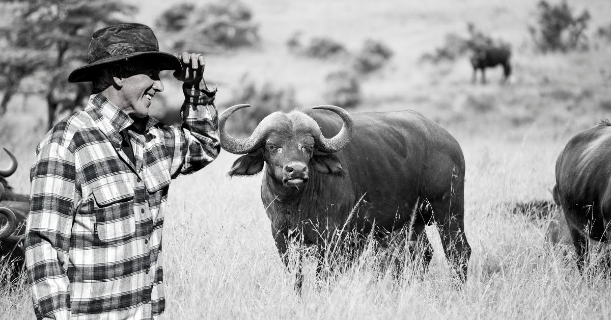person and buffalo